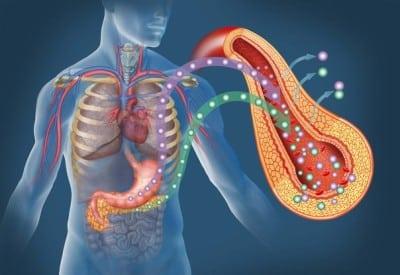 Роль в физиологических процессах