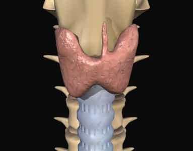 Характеристика органа