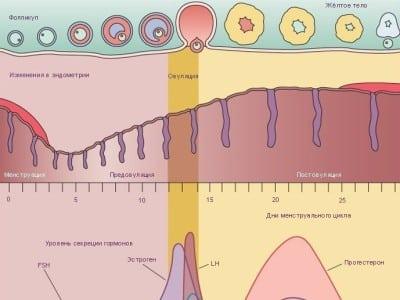Почему нужно измерять уровень пролактина в крови фото