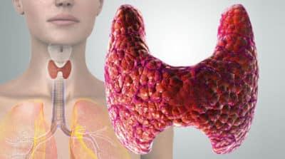 Строение щитовидной железы и важность для организма