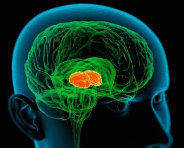 Гормон дофамін: що це таке, формула » журнал здоров'я iHealth 2